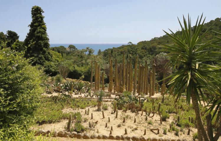 El jardí tropical Pinya de Rosa forma part del primer Paratge Natural d'Interès Nacional que es va declarar a Catalunya el 2003. Foto: Aj. Blanes