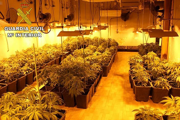 La plantació de marihuana de Maçanet de la Selva. Foto: cedida a l'ACN per la Guàrdia Civi