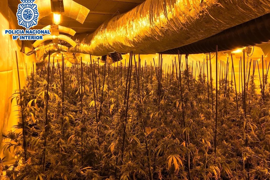 La plantació 'indoor' del xalet de Lloret de Mar. Foto: Cedida a l'ACN per la Policia Nacional