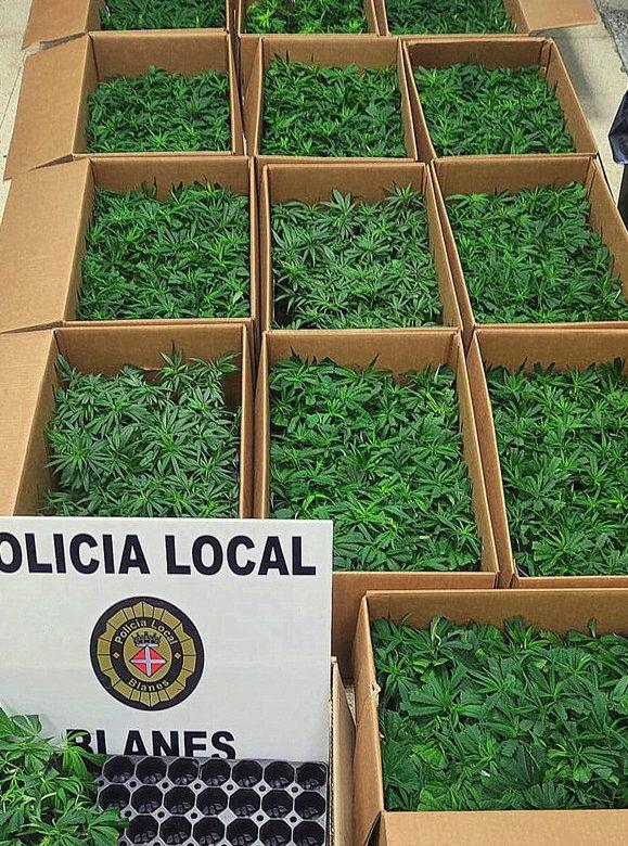 Blanes detingut marihuana